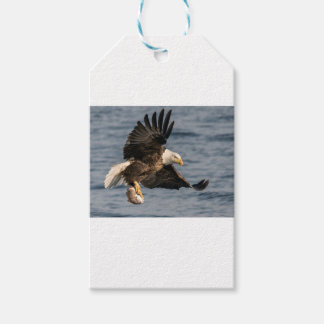 Bald Eagle Catching Food Pack Of Gift Tags