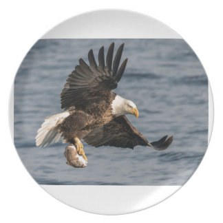 Bald Eagle Catching Food Plate