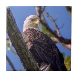 Bald Eagle Ceramic Photo Tile