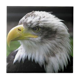 bald-eagle ceramic tiles