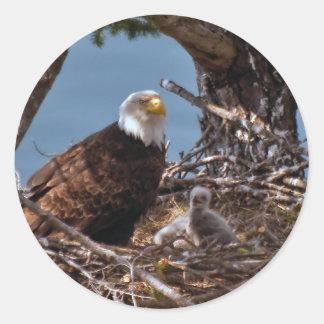 Bald Eagle Chicks - Sticker