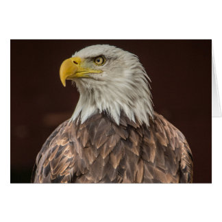 Bald Eagle design gifts and products Card