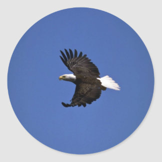 Bald Eagle flying across blue sky Classic Round Sticker