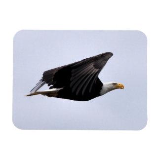 Bald Eagle Flying High! Rectangular Photo Magnet