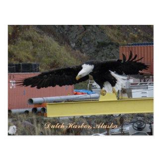 Bald Eagle Flying Over a Dock, Dutch Harbor, AK Postcard