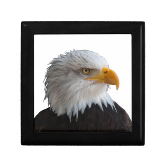 Bald eagle gift box