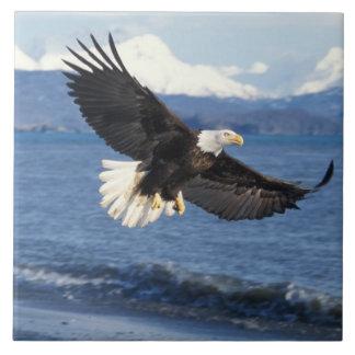 bald eagle, Haliaeetus leuccocephalus, in flight Tile