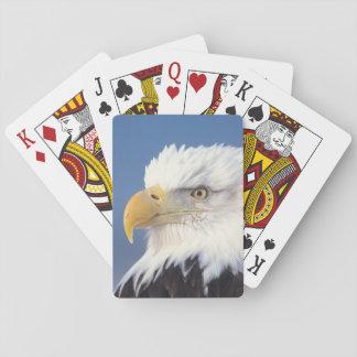 bald eagle, Haliaeetus leuccocephalus, Poker Deck