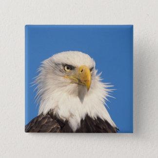 bald eagle, Haliaeetus leucocephalus, close up, 2 Inch Square Button