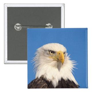 bald eagle, Haliaeetus leucocephalus, close up, 2 Inch Square Button