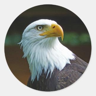Bald Eagle Head 001 02.1 rd Classic Round Sticker