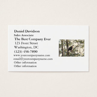 Bald Eagle in a Tree Business Card