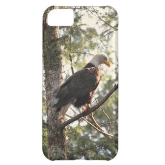 Bald Eagle in a Tree iPhone 5C Cases