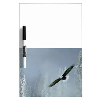 Bald Eagle In Flight Dry Erase Board Message Board