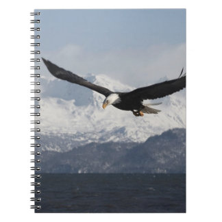 Bald Eagle in Flight, Haliaeetus leucocephalus, Note Book