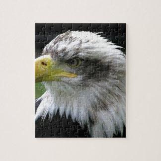 bald-eagle jigsaw puzzle