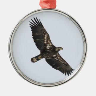 Bald Eagle (Juvenile) Silver-Colored Round Ornament