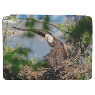Bald Eagle leaving the nest
