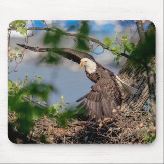 Bald Eagle leaving the nest Mouse Pad