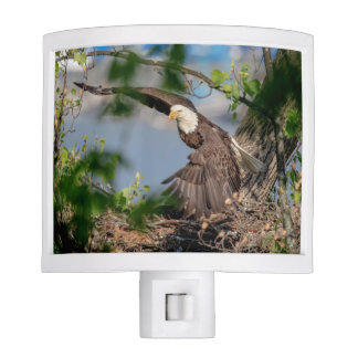 Bald Eagle leaving the nest Nite Lite