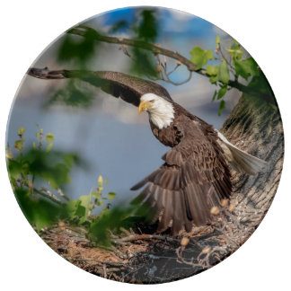 Bald Eagle leaving the nest Plate