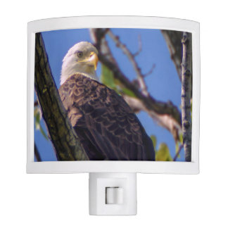 Bald Eagle Night Light