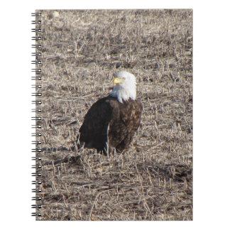 Bald Eagle Notebooks