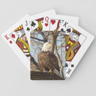 Bald Eagle on a branch Poker Deck