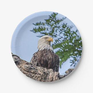Bald Eagle on a tree branch Paper Plate