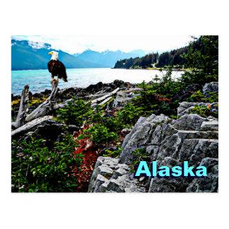 Bald Eagle On Alaska Coast Postcard