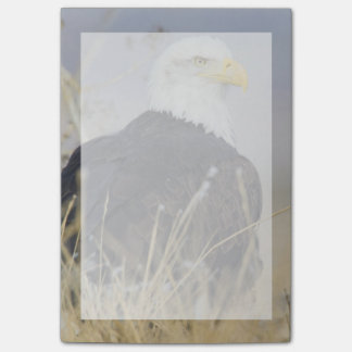 Bald Eagle on the ground Post-it Notes