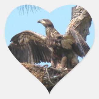 Bald Eagle Open Wings Stickers