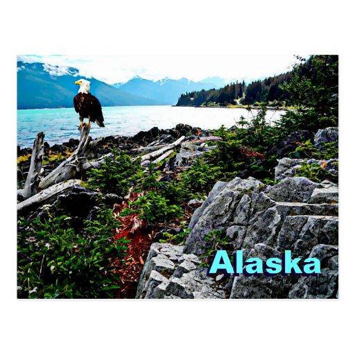 Bald Eagle Perched On Alaska Coast Postcards
