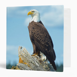 Bald Eagle perched on log, Canada 3 Ring Binders