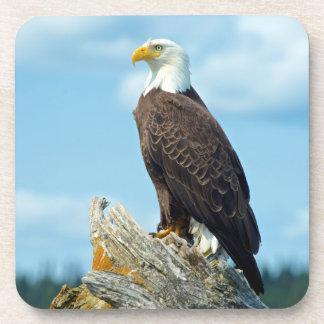 Bald Eagle perched on log, Canada Beverage Coasters