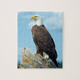 Bald Eagle perched on log, Canada Jigsaw Puzzle