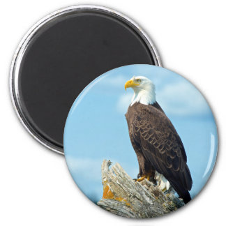 Bald Eagle perched on log, Canada Magnet