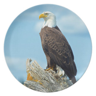 Bald Eagle perched on log, Canada Plate