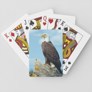 Bald Eagle perched on log, Canada Playing Cards
