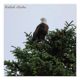 Bald Eagle Perfect Poster
