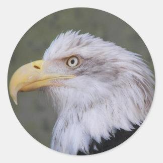 Bald Eagle Photo Classic Round Sticker