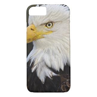 Bald Eagle portrait, Haliaetus leucocephalus, iPhone 7 Case