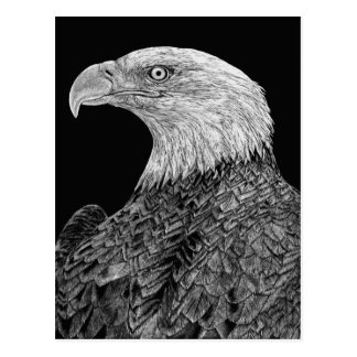 Bald Eagle Scratchboard Postcard
