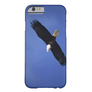 Bald eagle soaring , Alaska Barely There iPhone 6 Case