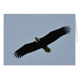 Bald Eagle Soaring Greeting Card