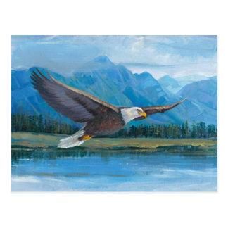 Bald Eagle Soaring Postcard