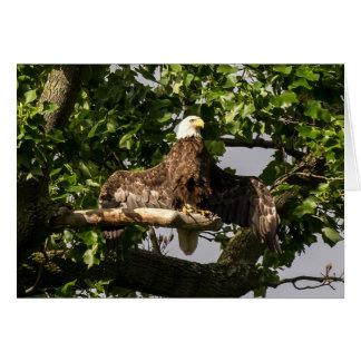 Bald Eagle, The Flasher Card