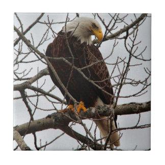 Bald Eagle Tile
