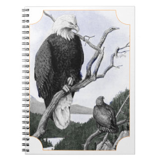 Bald Eagle Vintage Illustration Spiral Notebook
