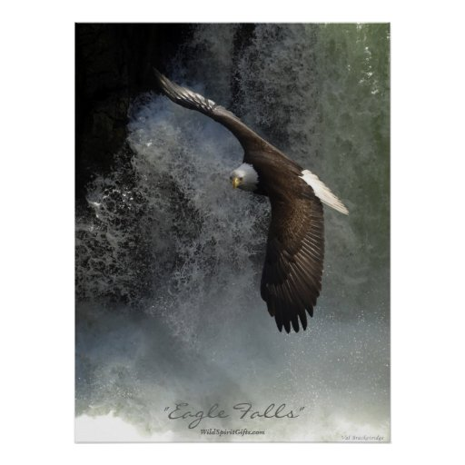 Bald Eagle & Waterfall Poster